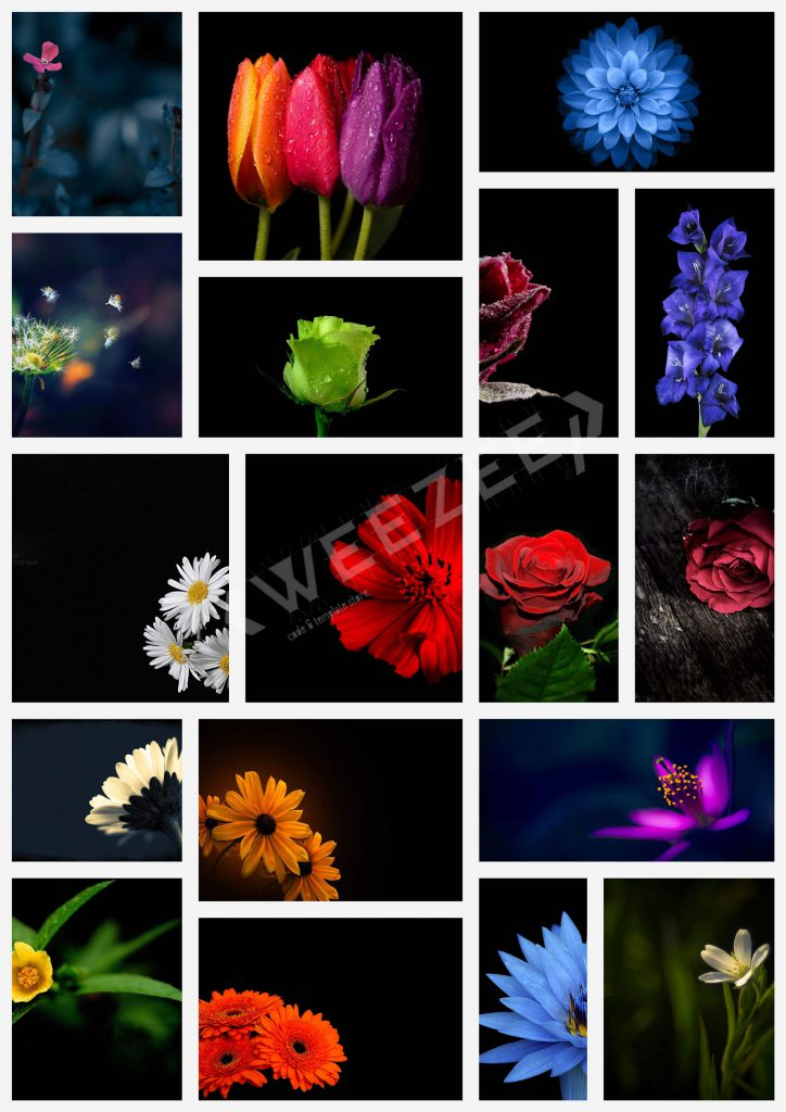 تصاویر با کیفیت گل برای پس زمینه وب سایت